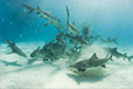 Bahamas Shark Diving Photos